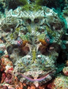 Crocodile_Fish_by_Craig_Brooks