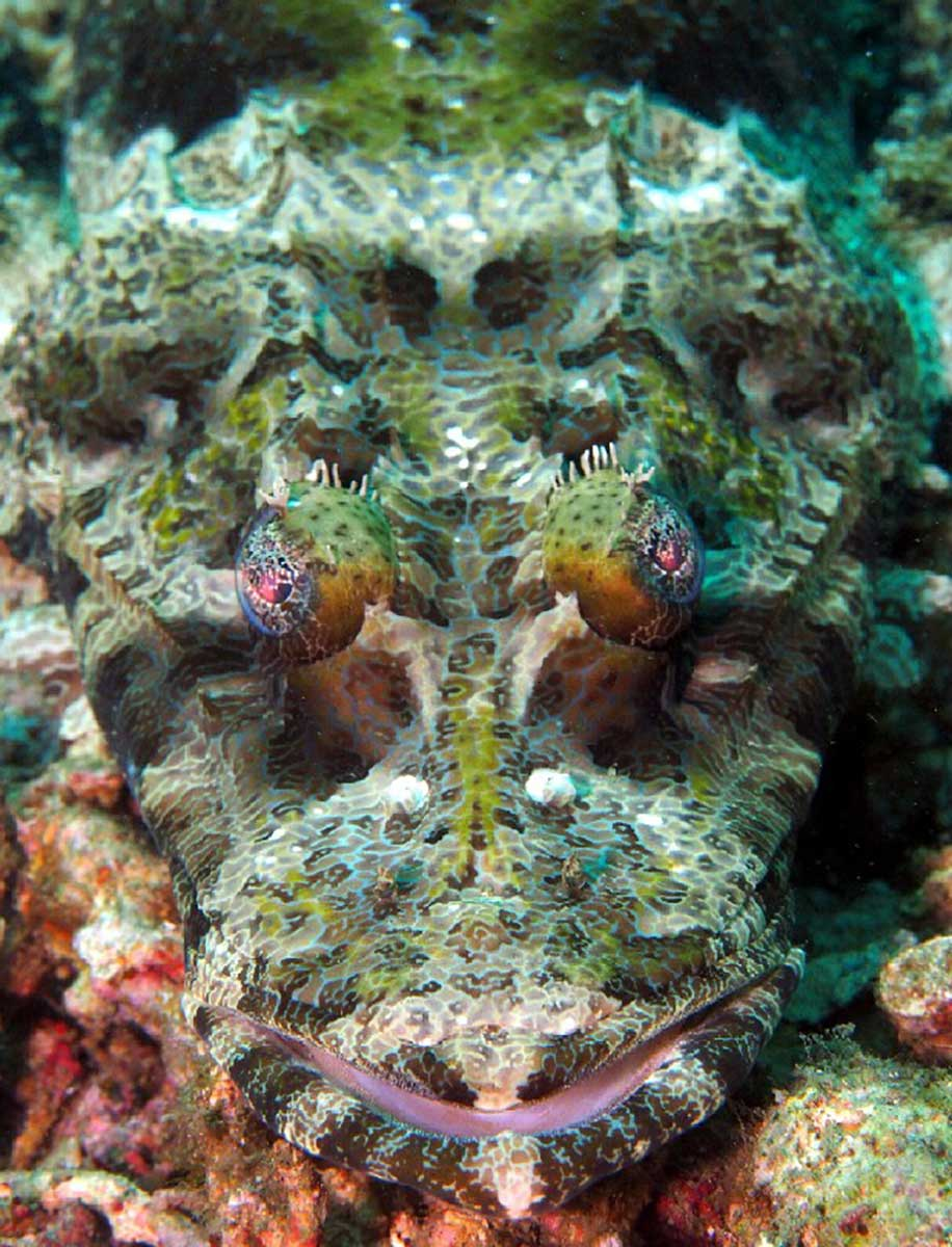 Crocodile_Fish_by_Craig_Brooks