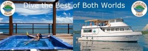 Dive the best of both worlds