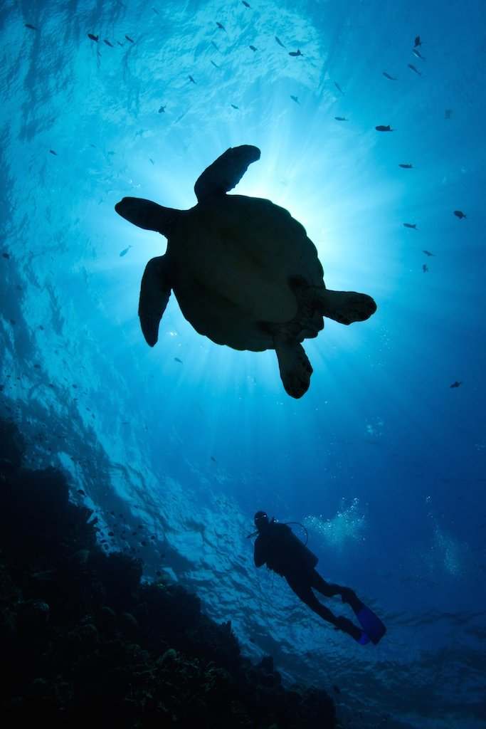 turtle silhouette_by_Andrew_Lim
