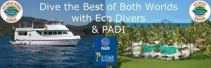 Eco Divers & PADI